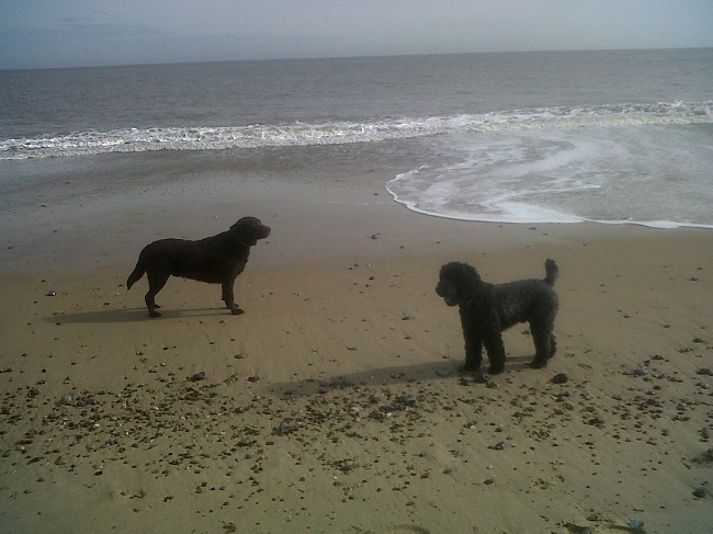 Walks Round Great Yarmouth With Dog